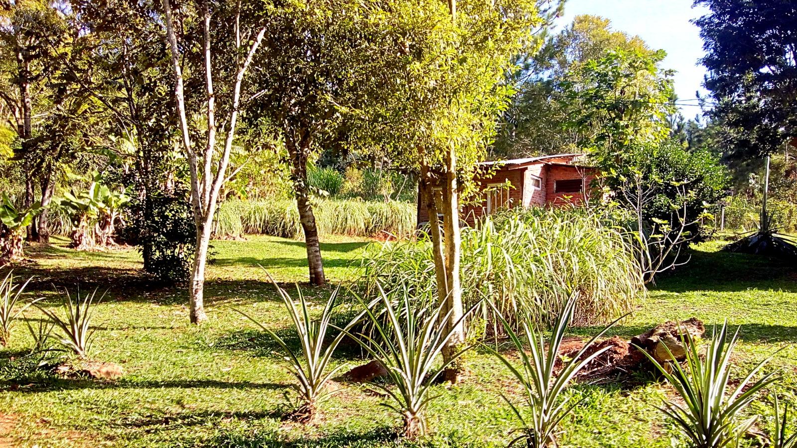 Parque en cabañas y Hostel Buena Vista, El Soberbio, Misiones