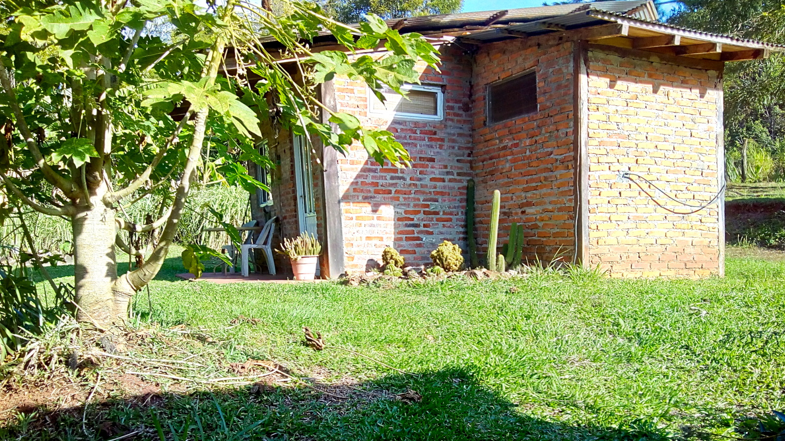 Vista exterior, plantas de mamón papaya, cabañas en El Soberbio, Misiones